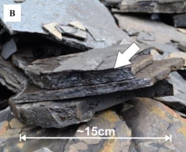 bitumen seepage